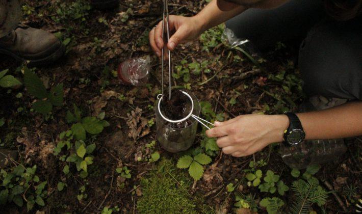 U Nacionalnom parku Kozara otkrivene čak 44 nove vrste