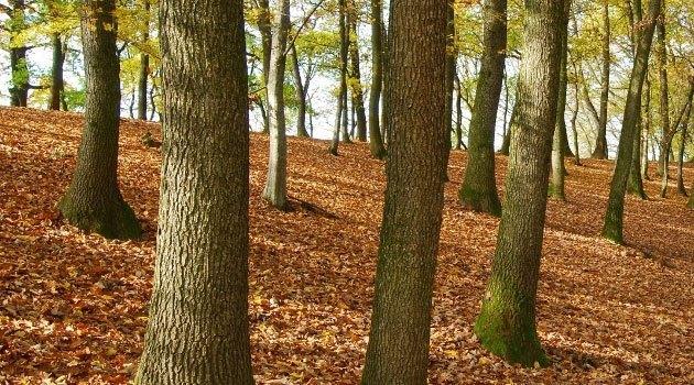 21. mart – Svjetski dan šuma