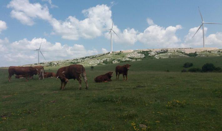 Žalba Energetskoj zajednici zbog ukidanja podsticaja za vjetroelektrane u RS-u